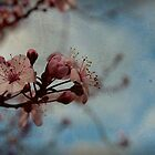 blossom... by jfpictures