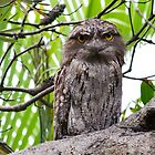 Tawny Frogmouth by Cheryl Styles