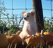 King Pumpkin  by Butterfly2008