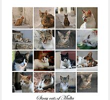 Stray cats in Malta by Ellen van Deelen