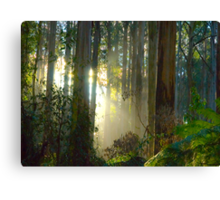 Sherbrooke Forest - Mt Dandenong Australia Canvas Print
