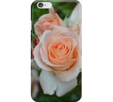 Delicate Rose iPhone Case/Skin