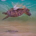 Honu, Green Sea Turtle by Barbara  Brown