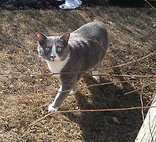 Cat in the yard by Elleandtwiler