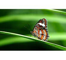 Nature's Beauty Photographic Print