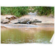 THE NILE CROCODILE - Crocodylus niloticus Poster