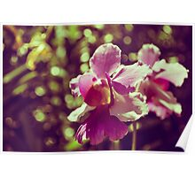Orchids Memories Poster