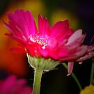 THE POWER OF A FLOWER by leonie7