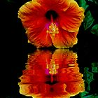 HIBISCUS REFLECTION by Johan  Nijenhuis