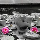 water flowers by Leigh Jones