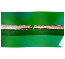 Two Big Caterpillars in a Green Nature Environment Poster