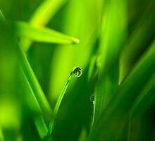 Drop of Water in Green Macro Landscape by adriancoopers