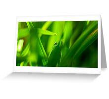 Drop of Water in Green Macro Landscape Greeting Card