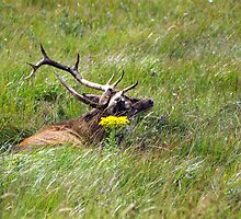 Stag doo by Kevin Meldrum