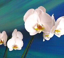 Orchids by terezadelpilar~ art & architecture