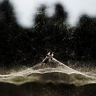 trap net by Hannele Luhtasela-el Showk