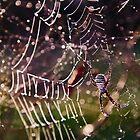 frosty spider by Hannele Luhtasela-el Showk