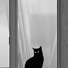 Cats Eyes And Curtains by Colin S Pearson