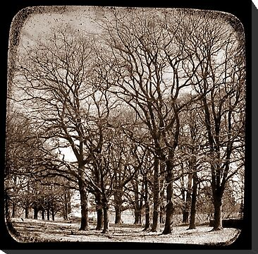 The Elms - Gostwyck, New South Wales, Australia by Kitsmumma