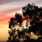 Sunsets Over Forster by sarahncraig