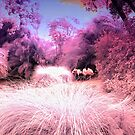 A flurry of Flamingos by Ant Vaughan