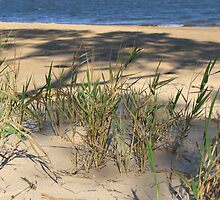 Grasses, Evening at Marlo. by conorsmum