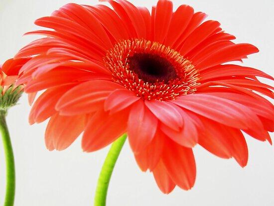 http://ih3.redbubble.net/image.4288812.8302/flat,550x550,075,f.jpg