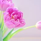 Pretty Pale Tulips by lisa1970