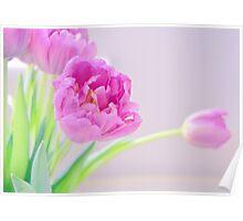 Pretty Pale Tulips Poster