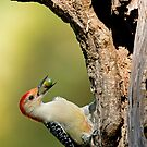Woodpecker Storing Up For Winter by imagetj