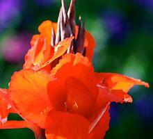 The Garden by patti4glory