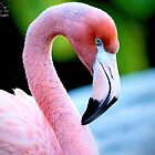 Flamingo by imagetj