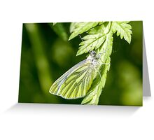 Green-viened White Butterfly Greeting Card
