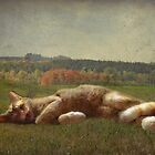 Dreaming of Outside! by vigor