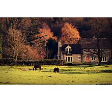 Little Country Dream Photographic Print