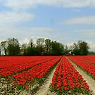 RED ROWS OF TULIPS by Johan  Nijenhuis