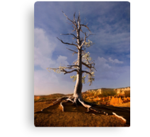 Sunrise over Bryce Canyon .3 Canvas Print