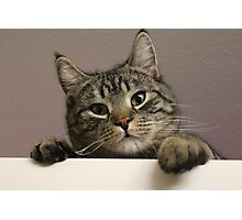 Kitten on Cupboard Photographic Print