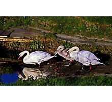 Last lessons for Signet. Photographic Print