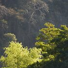 trees - arboles by Bernhard Matejka
