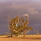 Drought effected trees by Suzanne Jaeschke