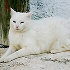 Greek cat by Cvail73