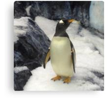 Penguin at Seaworld Orlando, FL Canvas Print