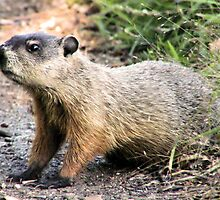 GROUNDHOG by rjf5