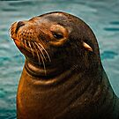 Sea Lion by Scott Ward