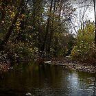 Delberts  Creek by PicsbyJody