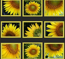 Sunflowers Calendar 2010 by Virginia N. Fred