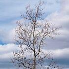 Winter tree by Fabio Procaccini