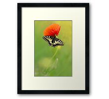Impression with butterfly and red poppy Framed Print