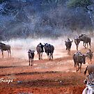 AFRICAN WINTER-SCAPE by Magaret Meintjes